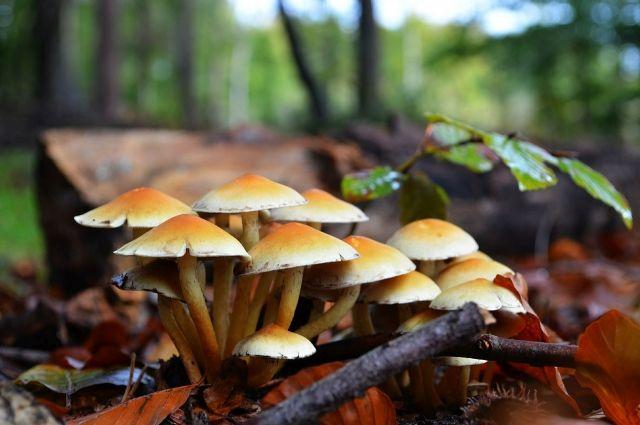 ВТамбовской области зафиксировано 16 пострадавших ототравления грибами