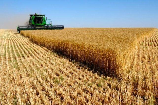 Украинские аграрии продали зарубеж рекордные 43,4 млн тонн зерновых