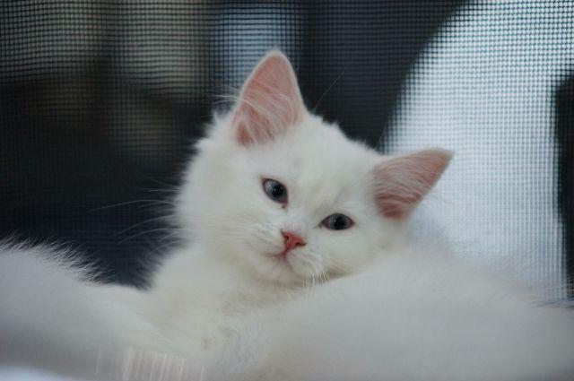 Тюменцы покрасили кошку: у животного рыжая голова и фиолетовый хвост