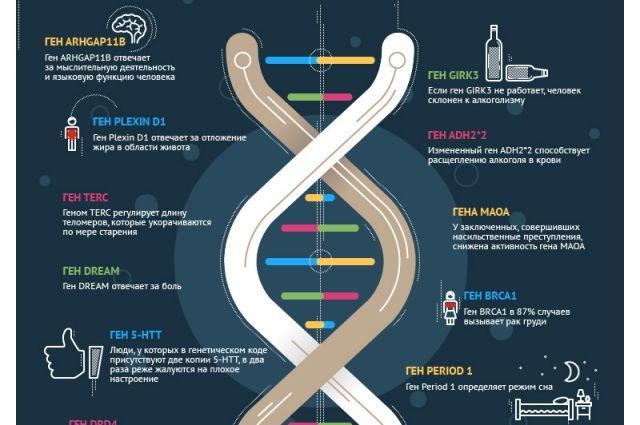 Ученые научились исправлять генотип