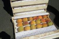 Нектарины были заражены плодожоркой.
