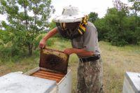 Работа пчеловода опасна и трудна.