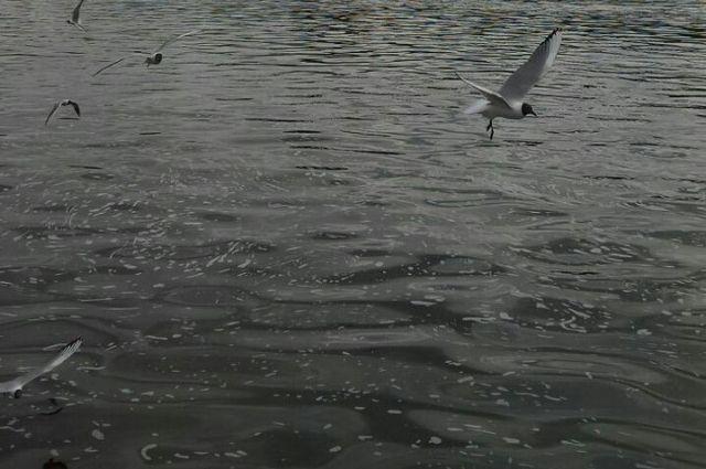 Дети рыбачили без присмотра взрослых.