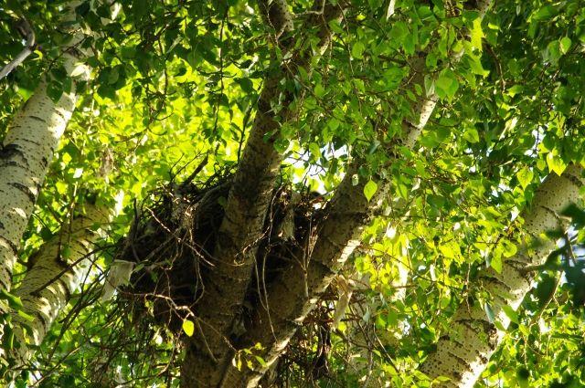 Вероятно, птенец выпал из гнезда.