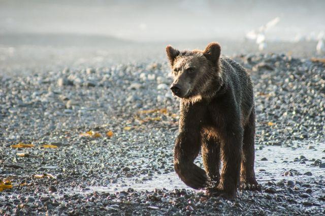 От «человеческой» еды у медвежат может быть несварение.