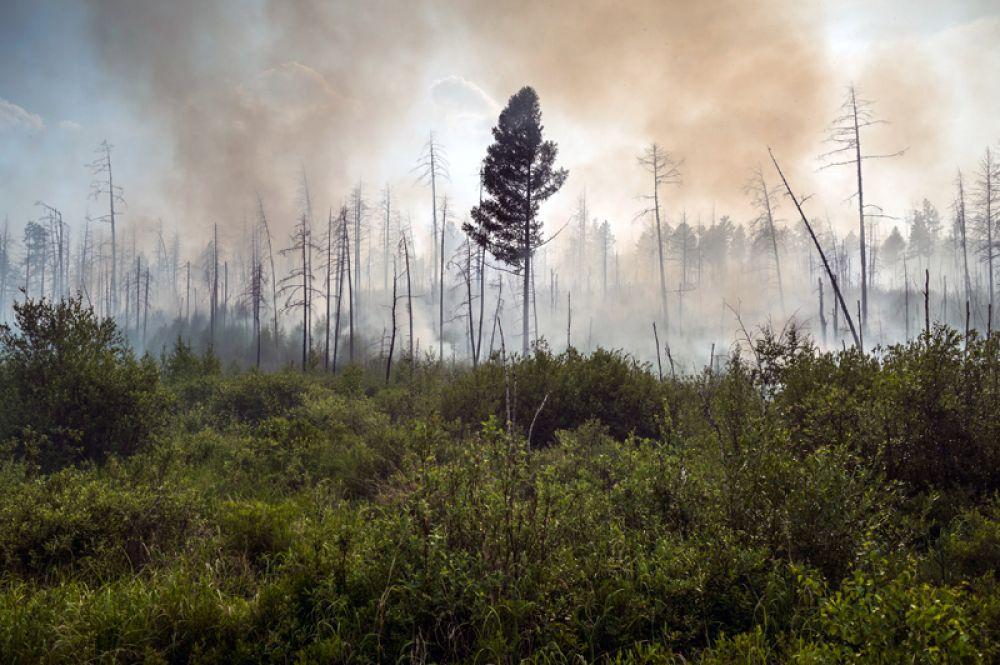 Лесной пожар в окрестностях села Бичура в Бичурском районе Бурятии.