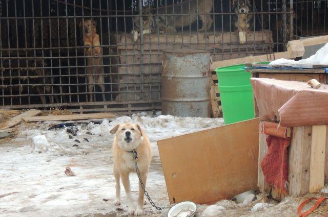 Скандал с приютом разгорелся после жестокого убийства животных.