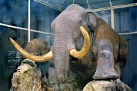 Крупнейший в стране Зоологический музей был основан в 1832 году.