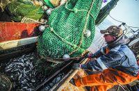 Уловы рыбаков в этом году заметно выросли.