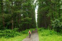 Сосновые леса - любимое место отдыха сибиряков и
