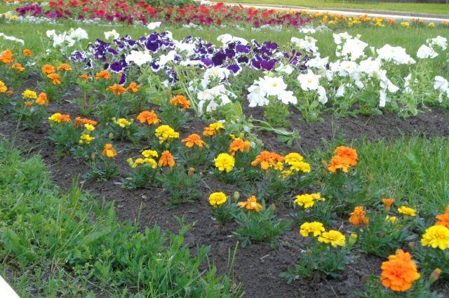 Тюменцы могут принять участие в конкурсе «Городские цветы»