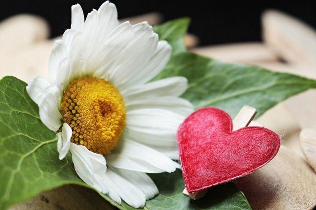 В Оренбурге состоится благотворительная акция «Белый цветок».