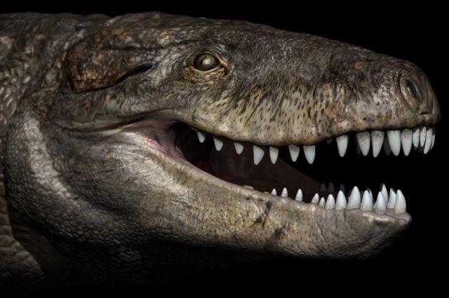 Палеонтологи отыскали наМадагаскаре первого гигантского крокодила