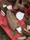Найденная челюсть могла принадлежать корове или свинье.