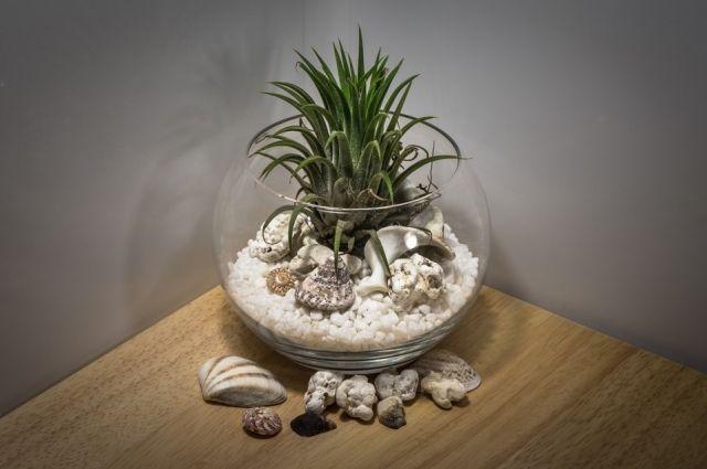 Обязательные элементы флорариума - стеклянная ёмкость, растение, грунт и декор.