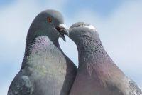 Птицы и животные испытывают друг к другу настоящие чувства.