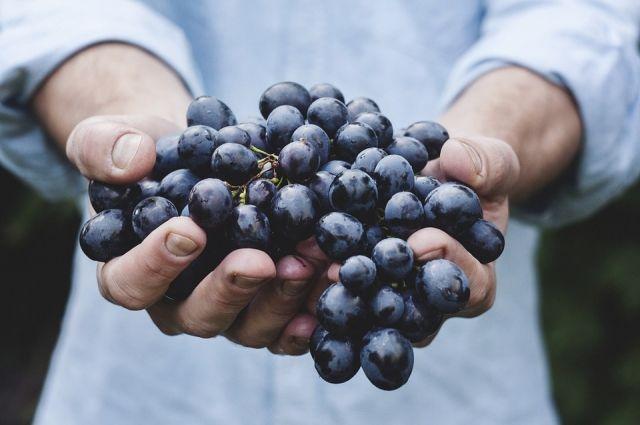 Гроздь винограда ушла смолотка за $11 тыс. вЯпонии
