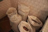 В подвале жилого дома под Светлогорском нашли 300 кг янтаря-сырца.