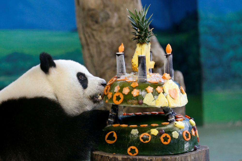 6 июля. Гигантская панда ест свой «торт ко дню рождения», сделанный из льда и фруктов в зоопарке Тайбэя, Тайвань.