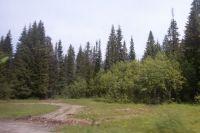 Пожилая женщина провела в лесу более суток.