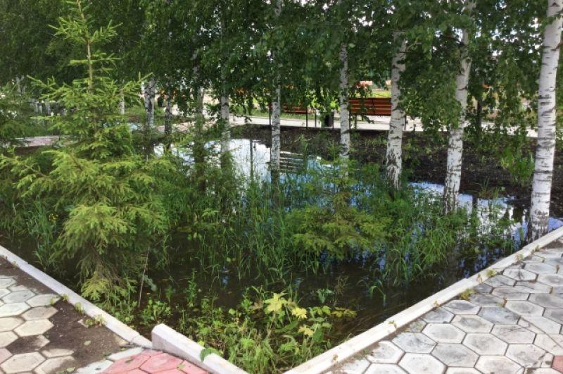 Мини-пруд с берёзами в местном парке.