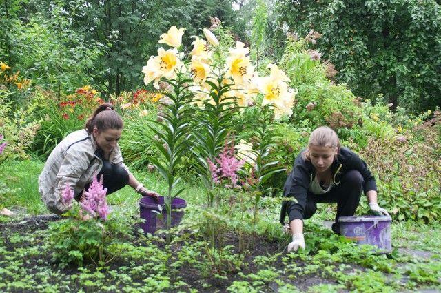 Цветы будут высажены несмотря на непогоду.