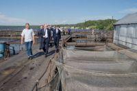 В Южноуральске рыбоводческие предприятие уже действует, но вскоре в Еткульском районе появится ещё более крупный завод.