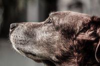В Тюмени скончался пёс, которого изверги выкинули с проволокой на шее
