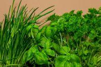 Заморозить на зиму можно не только укроп и петрушку, но и щавель, шпинат и мяту.