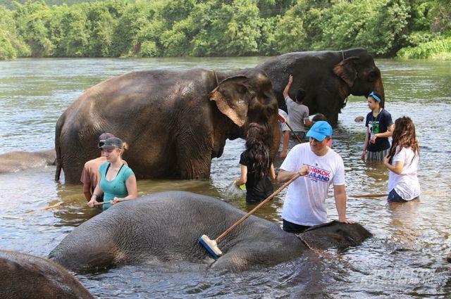 «Пенсионеры» с хоботом. Репортаж из «дома престарелых» для слонов