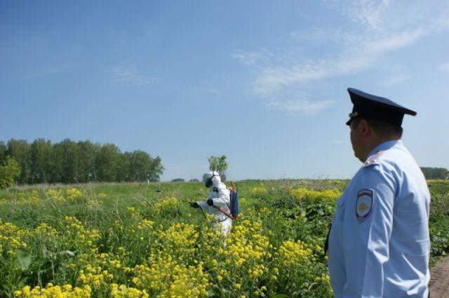 В Тюменской области сожгли, скосили и перепахали 3 гектара дикой конопли