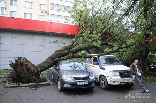 Самый простой совет - не паркуйтесь под деревьями.