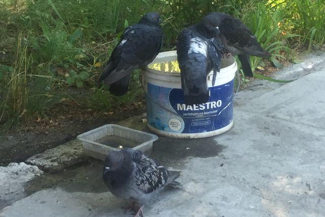 Житель Ноябрьска во дворе стрелял по голубям