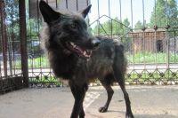 В барнаульском зоопарке волк напал на маленького ребенка.