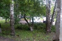 Сильный ветер во время грозы ломал деревья