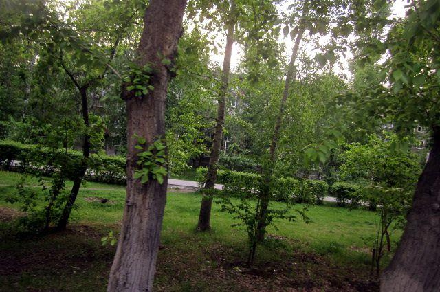 Любитель бесплатных дров из Тюмени лишился машины