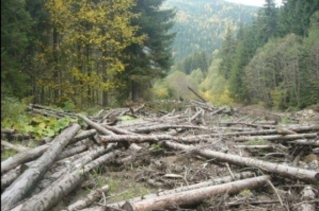 Срезанные деревья