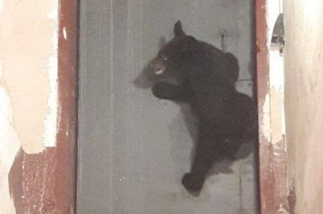 Медвежонок оказался очень подвижным и любопытным ребёнком.