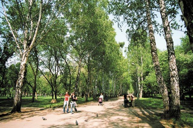 В городе благоустраивают зеленые зоны