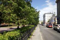 В центральной части Кемерова проведут опиловку деревьев.