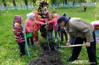 7,5 млн деревьев высадят кузбассовцы в этом году - это будет новый «зеленый» рекорд.