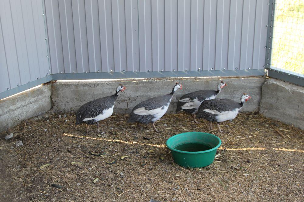 На базе есть два крытых вольера для птиц, в них разводят краснокнижных пернатых, а затем отпускают их в естественную среду.