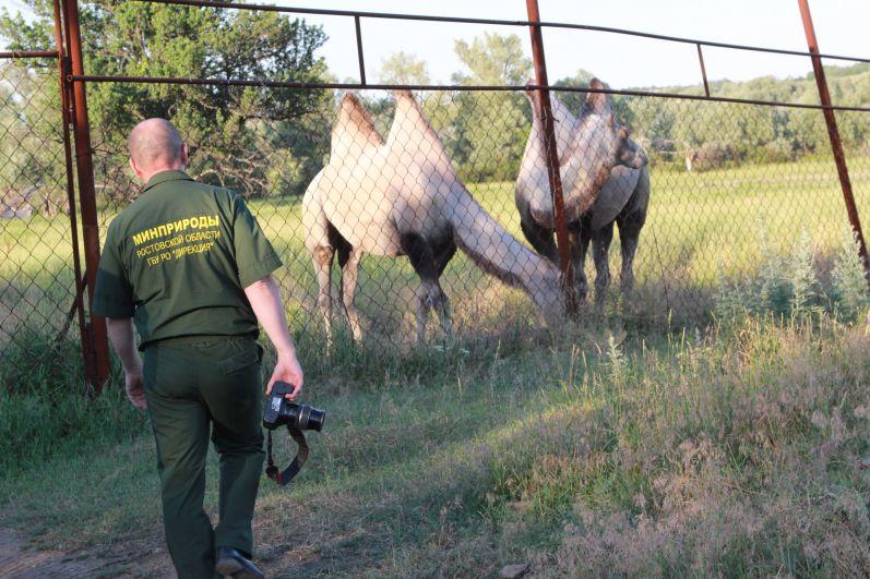 Мы приехали к Мише и Маше - эти верблюды любимцы детей. У них свой просторный вольер. Завидев нас, животные примчались навстречу, в надежде полакомиться чем-нибудь вкусненьким.