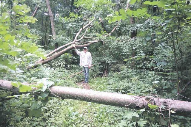 Тропинки то и дело преграждают упавшие стволы деревьев...