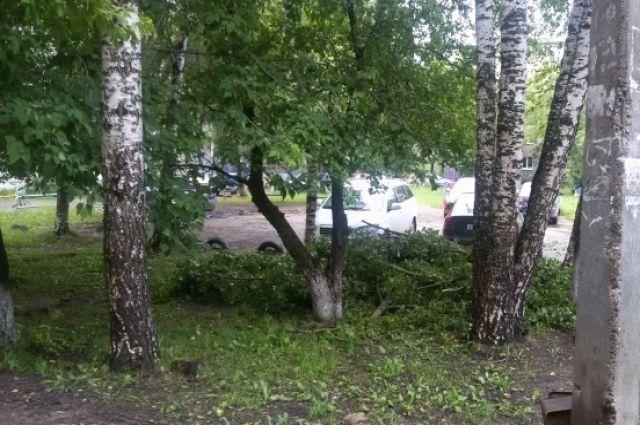 Сильный ветер может повалить деревья и рекламные щиты.