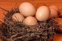 Всемирный день яйца предлагают отмечать тюменцам
