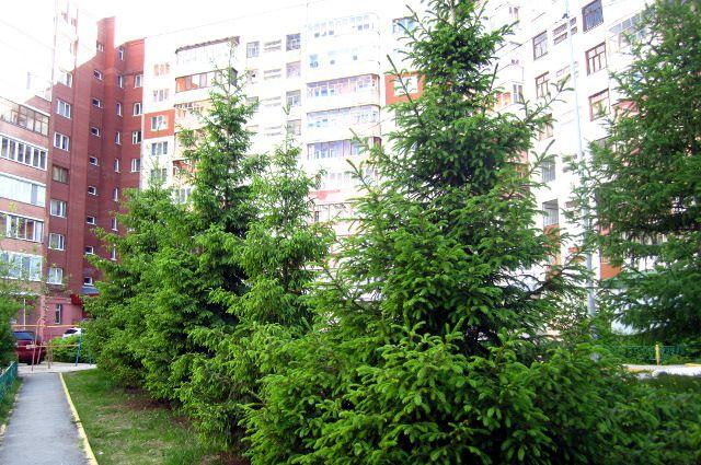 Тюменцы переживают, что через их двор пройдет дорога к новой школе