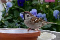 «Бедные птички»: тюменцы обеспокоены массовой гибелью воробьев