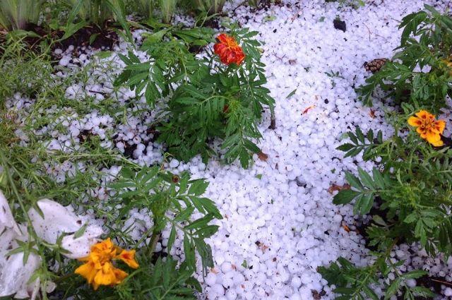 «У нас чуть-чуть была зима»: в Сладковском районе град образовал сугробы