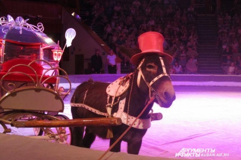 Цирковой ослик очень любит фотографироваться.